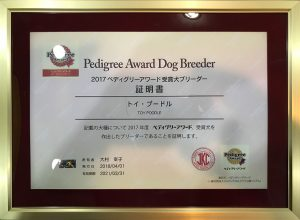 Pedigree award dog breeder Toy Poodle